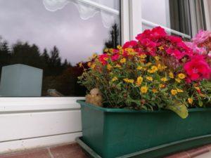 Blumenkasten am Fenster